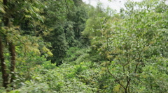 Wide high angle tracking shot of zipline in rain forest trees / Quepos, Stock Footage