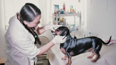 Veterinarian checks dog denture Stock Footage