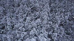 Passing over Snowy Trees in Winter Looking Down Aerial Stock Footage