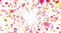 Flower petals pink front Bw 4K 4k or 4k+ Resolution
