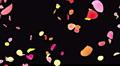 Flower petals pink tornado Ab 4K 4k or 4k+ Resolution