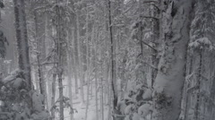 Reverse Falling Tilt Up Aerial Snowy Forest in Winter Stock Footage