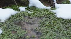 Watercress Spring Stock Footage