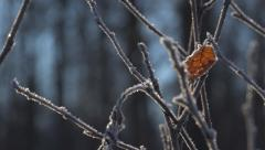 Slide right macro single frost-rimed leaf on bare twigs 4K - stock footage