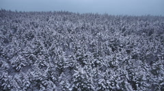 Snowy Winter Forest Foggy Aerial Moving left Stock Footage