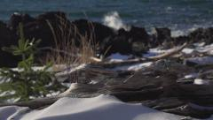Weatherworn Driftwood Knots on Rocky Shore with Splashes in Wind Sli Stock Footage