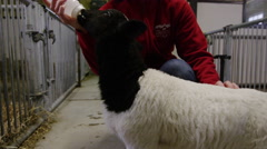 Steadicam Shot of Farmer nursing a newborn Goat with Milk from a Bottle Stock Footage
