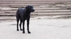 Black Dog homeless on the street asks passers food Stock Footage