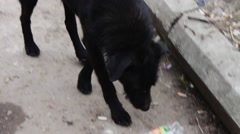 Homeless on the street Black Dog gnaws a plastic bottle Stock Footage