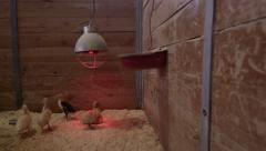 Steadicam shot of Ducks in a farming pen with a heat light Stock Footage