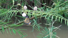 A Colorful Insect Butterfly Hangs Upside-Down Stock Footage