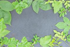 frame  of fresh berry leaves - stock photo