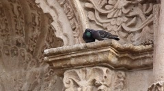 Two doves kissing while sitting on a picturesque stone wall, Arequipa, Peru Stock Footage