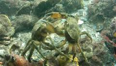 Crab fight Stock Footage