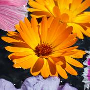 colorful flowers with dew  drops - stock photo