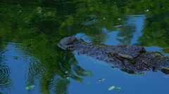 Crocodile slowly floats on the mirror surface of the water. Stock Footage