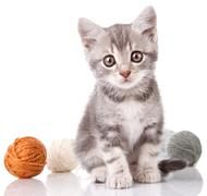 cute gray kitten - stock photo