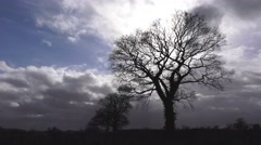 Storm clouds approaching Oak Trees Stock Footage