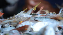 Fish in the market Stock Footage
