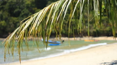 Green palm leaves and the beach Stock Footage