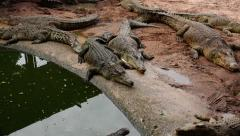 Family of crocodiles on vacation. Stock Footage