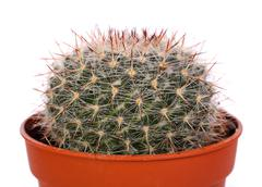 decorative cactus - stock photo