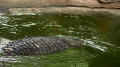 Crocodile immersed in water like a submarine. Stock Footage