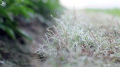 dew on grass - stock footage