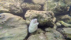The eel lives underwater at South Male Atoll of Maldives Stock Footage