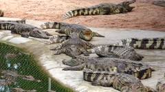 Crocodiles in prison. Stock Footage