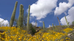 Stock Video Footage of 4K Puffy Clouds Rise Over Arizona Desert Hillside Time Lapse