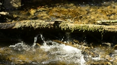Small creek with tree Stock Footage
