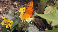 Butterfly in the garden Stock Footage