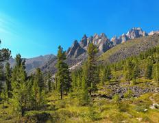 Alpine woodlands - stock photo