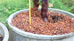 Fermentation Process From Coffee Peel HD Stock Footage