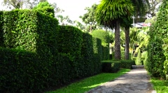 Park. Shrub. Alley.  Nature. Eco. Stock Footage