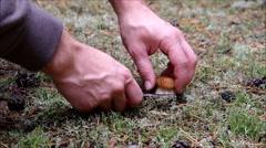 Mushrooming cep Stock Footage