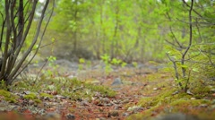 Low Angle of Hiker in Northern Forest in Russia Stock Footage