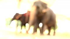 Two elephant. The overall plan, not the focus. Stock Footage
