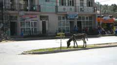 Street scene on the road, Mekelle, Ethiopia, Africa Stock Footage