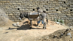 Local man carrying sand with donkey in the street of the Mekkele. Stock Footage