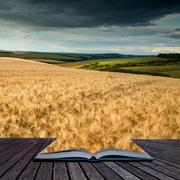 Stunning countryside landscape wheat field in Summer sunset conceptual book i Stock Illustration