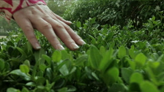 Female hand touch green bushes close-up Stock Footage