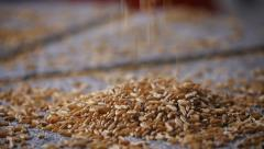 0641 Wheat grains falling on millstone - stock footage