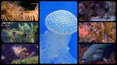 Stock Video Footage of diverse fishes collage