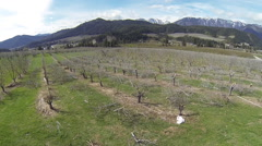Orchard Aerial Drone Flyover Stock Footage