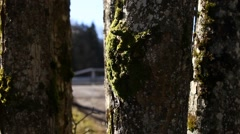 Moss on the tree - stock footage