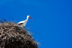 Armenian Crane Bird Stock Photos