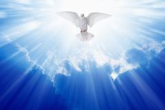 Holy spirit dove - stock illustration