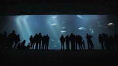 Aquarium silhouettes at the Monterey Bay Aquarium Stock Footage